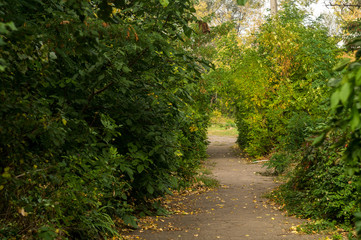 Autumn path in the frame of bright leaves