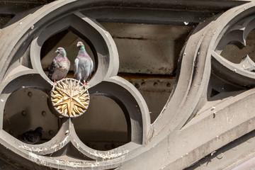 Zwei Tauben in der Verzierung einer Brücke