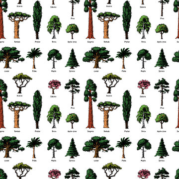Vector tree sketch hand drawn style types green forest pine treetops collection of birch, cedar and acacia or greenery garden with palm and sakura illustration background
