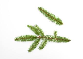 Nature fresh green fir tree branch on white background