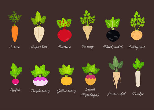 Vector set of different root vegetables