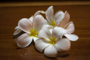 white flowers of plumeria on a wooden background