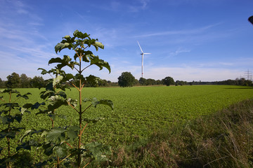 a windmill in a landscape picture