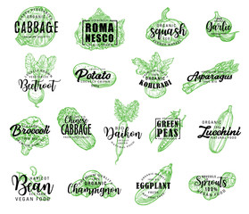 Vegetables, greenery and salads vector lettering