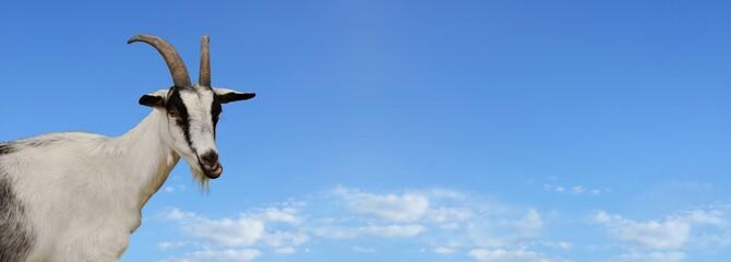 Ziege mit Himmel Hintegrund