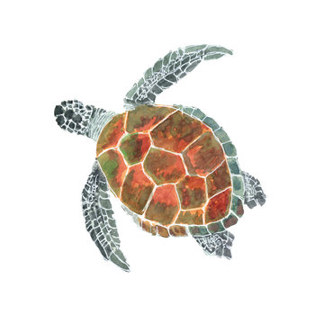 Sea turtle watercolor isolated . Sea turtle on white background. Watercolor hand painted illustration of a Sea turtle.