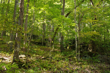 Large stone boulders in the forest in Warren County surrounded by trees in northwest Pennsylvania, USA