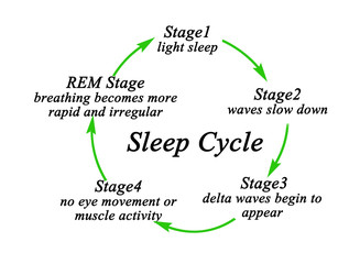 Stages of Sleep Cycle