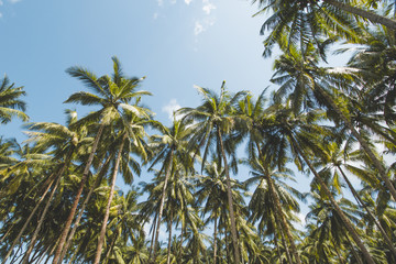 Palm or Coconut Tree, Cloudy Blue Sky and Tropical Beach