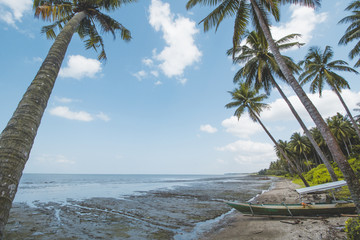 Coconut or Palm Tree, Cloudy Sky and Tropical Mud Beach