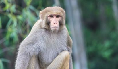 monkey looking straight towards camera