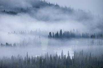 Spoed Fotobehang Ochtendstond met mist A foggy morning the forests of the Rocky Mountains of Alberta, Canada