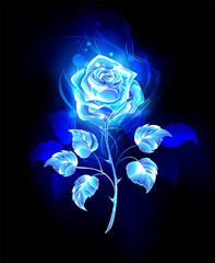 Burning blue rose