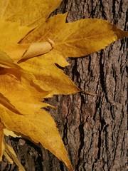 automne feuille jaune et bois