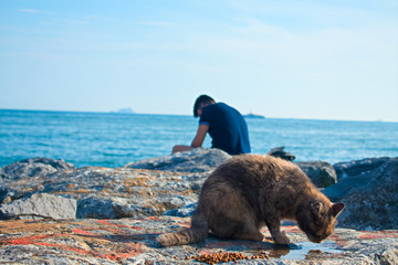 Cat and a man in the seashore