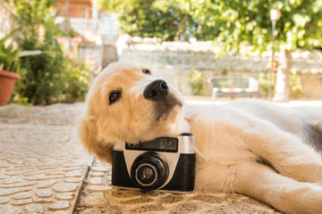 Old camera and puppy dog outdoors.Portrait of an adorable puppy