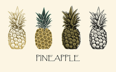 Vector illustration. Sketch drawing pineapple in different styles. Vector objects.