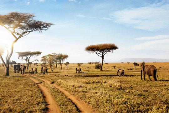 Group of elephants walking in wild nature in savanna.