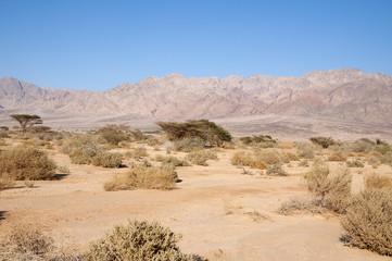 Ein Evrona, Eilat desert