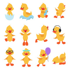 Cute chicks. Cartoon yellow ducks. Baby duck vector set. Bird animal, baby duck illustration