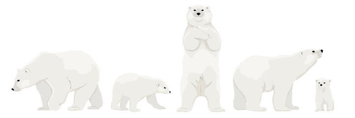 Set of adult polar bears and their young cubs in various poses. Northern animals. Vector