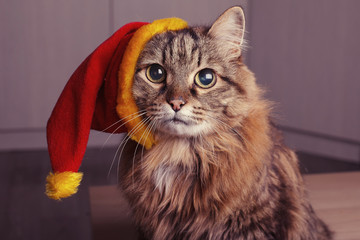 A cat in a Santa Claus Christmas hat is looking at the camera.