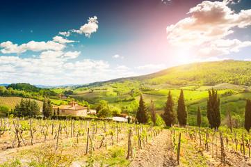 Vineyards in Tuscany, Italy. Beautiful summer landscape