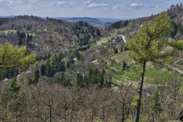 wiosenny krajobraz górski z modrzewiami z widocznymi liniami zielonych drzew