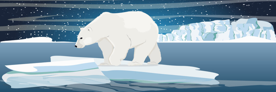 Large polar bear on an ice floe drifting in a cold northern ocean. The glacier and the snow-covered plains and the cold blue sea. Starry night in the North. Landscapes of the Arctic.