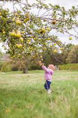 Mädchen in pinker Jacke pflückt Apfel von Apfelbaum. Girl in pink jacket picking apple from apple tree.