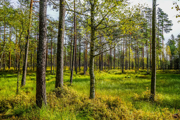 Lahemaa National Park is a park located in northern Estonia,  east from the capital Tallinn.