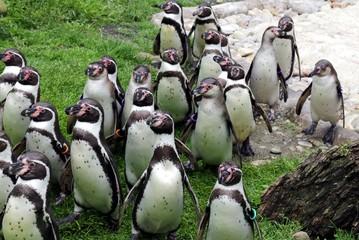 penguin, wien, animal, penguins, beak, polar, wild, zoo, cute, group,