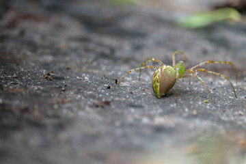 Beautiful Green Florida Spider