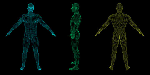 Standing man. Wireframe human body. Vector outline illustration.