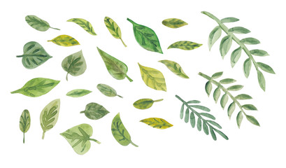 Collection of watercolor green leaves