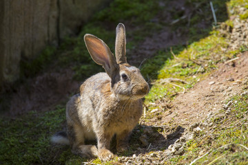 image with detail of a brown looking hare.