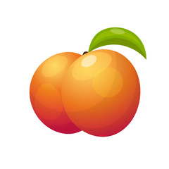 Ripe peaches, whole and slice. Vector illustration.