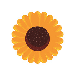 sunflower flower decoration natural flora