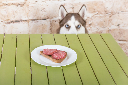 Husk's dog steals a piece of sausage from the table in secret from the owners.