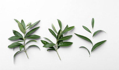 Twigs with fresh green olive leaves on white background, top view
