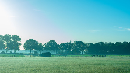 Felder mit Pferden im frühen Morgenlicht. - Standort: Deutschland, Nordrhein - Westfalen, Borken-Marbeck