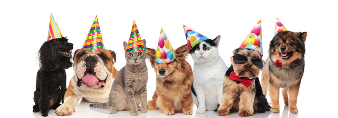 group of seven adorable cats and dogs on birthday party
