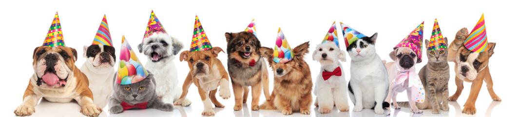 adorable cats and dogs attending a birthday party