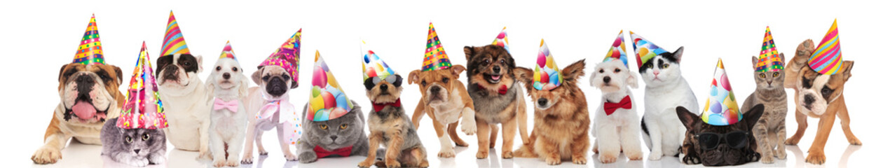 group of many funny pets wearing birthday hats