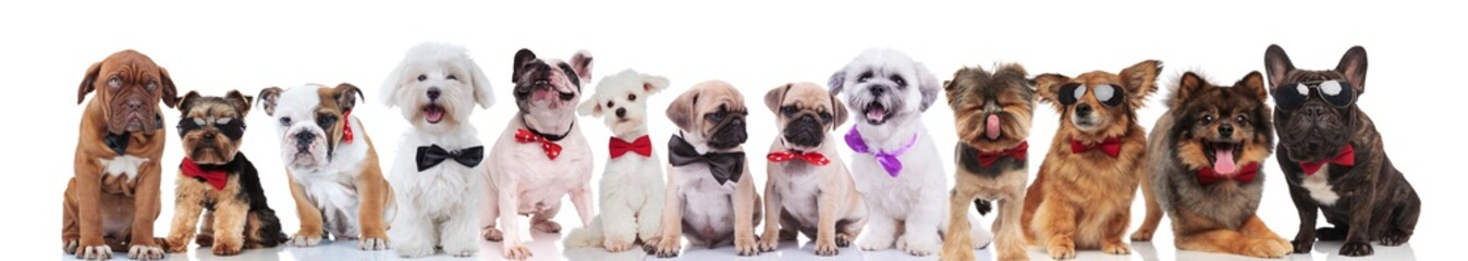 many elegant dogs of different breeds wearing bowties