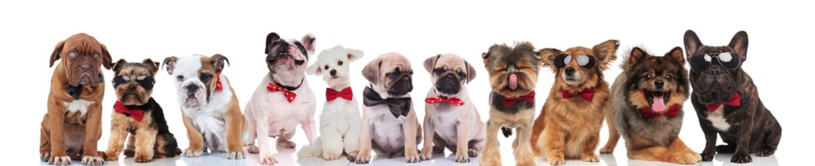 cute group of happy dogs wearing sunglasses and bowties