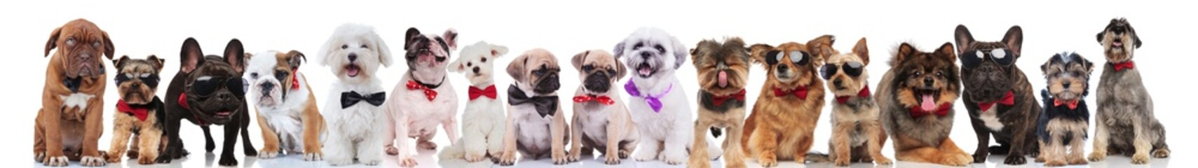 many stylish dogs of different breeds wearing bowties and sunglasses