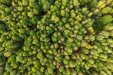 Green summer autumn forest aerial view