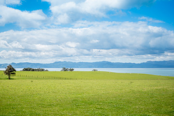 Green pastures overlooking the ocean and the coromandel peninsula Wall mural
