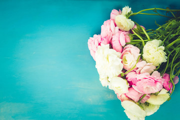 Pink and white ranunculus blooming fresh flowers on blue wooden background with copy space, retro toned